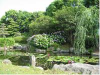 画像:日本庭園の池にうかぶスイレン