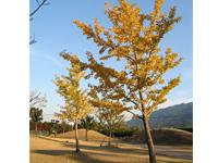 画像:全体に紅葉した秋晴れの日は美しい