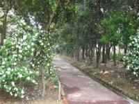 画像:照葉樹見本園入口