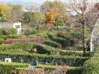 画像:イスノキ、サザンカ、セイヨウカナメモチ、ナンテン、フイリマサキ、ベニバナトキワマンサクなどの生垣が並ぶ。